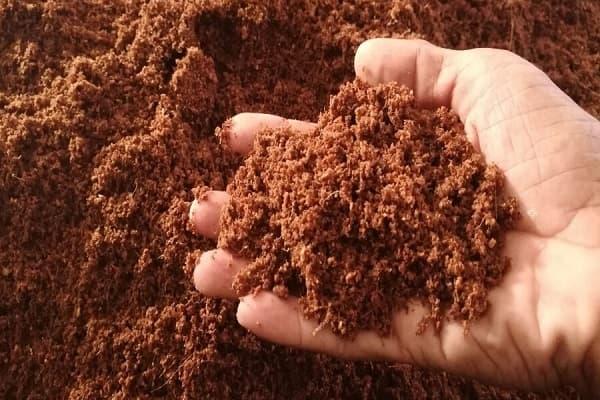 xơ dừa dạng bột (mụn dừa, mùn dừa)