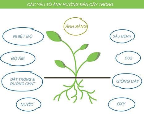 các yếu tố ảnh hưởng đến cây trồng