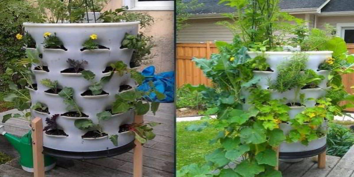 cách làm tháp trồng rau sạch