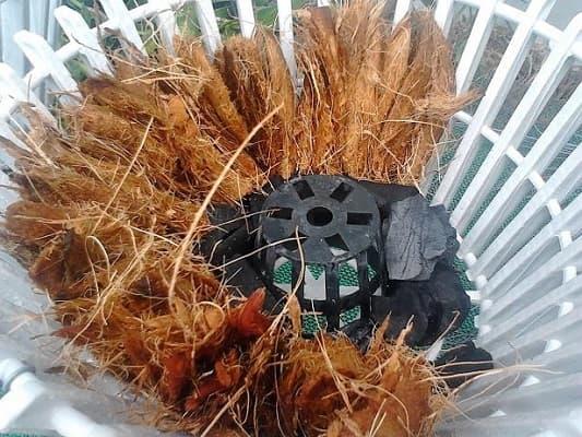 cách trồng lan bằng xơ dừa