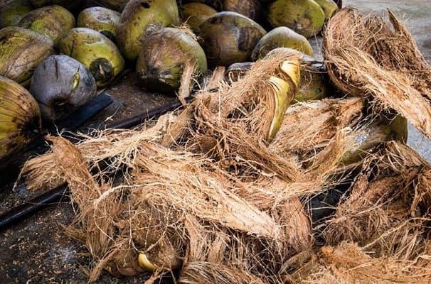 chọn lựa xơ dừa và rửa sạch