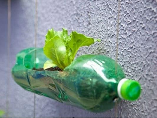 cố định chai nhựa trồng rau