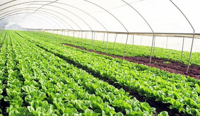 công nghệ trồng rau sạch của isreal trong nhà kính