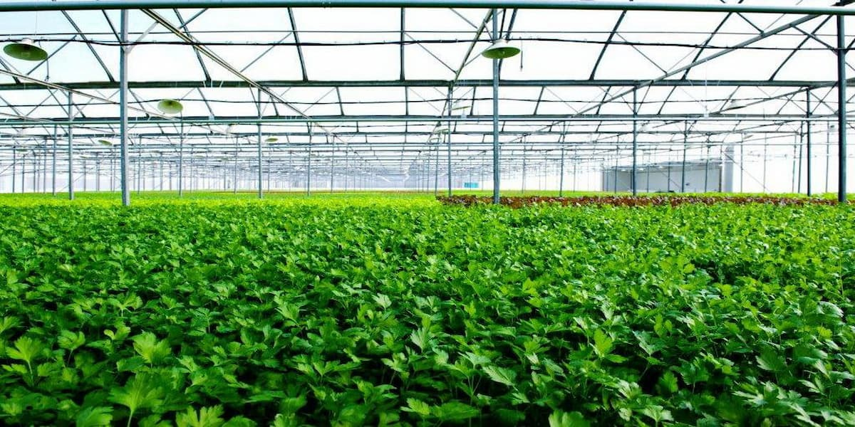 công nghệ trồng rau sạch của isreal