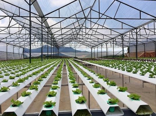 công nghệ trồng rau sạch của nhật bản là gì