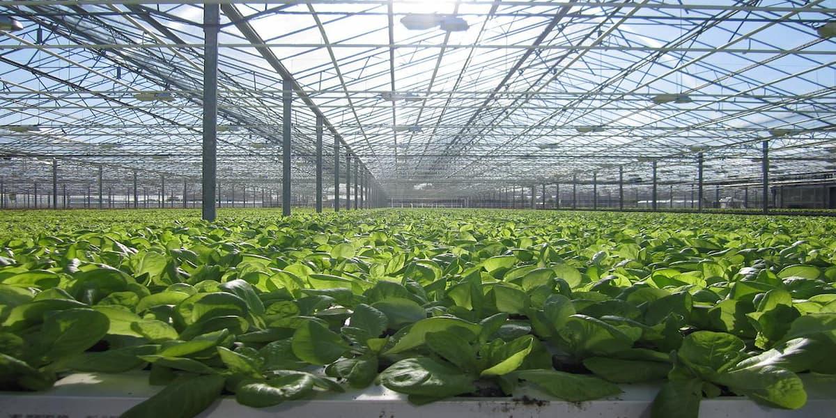 công nghệ trồng rau sạch của nhật bản
