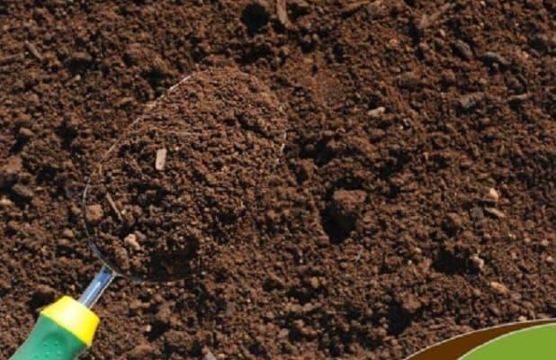 Đất phù sa màu mỡ