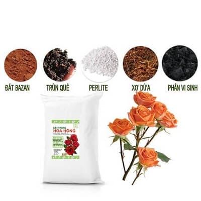 Đất trồng hoa hồng trộn sẵn