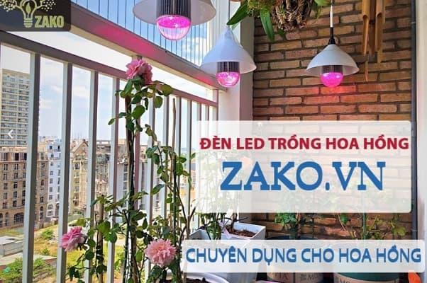 Đèn led trồng hoa hồng zako