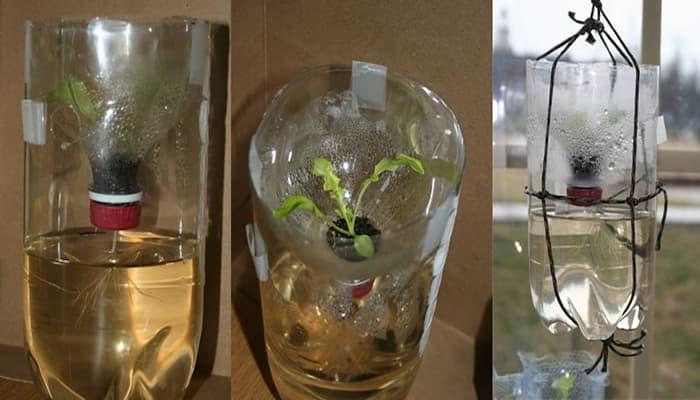 dung dịch trồng rau thủy canh trong chai nhựa