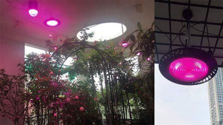 đèn led ufo cho hoa hồng đặt sát trần