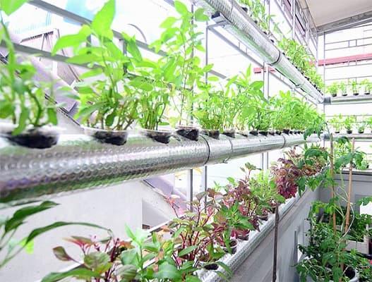 giá thể trồng rau thủy canh là gì
