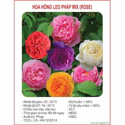 hạt giống hoa hồng leo pháp