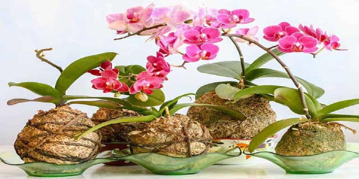 huong dan cach trong lan bang xo dua vua don gian vua cho hoa dep ruc ro