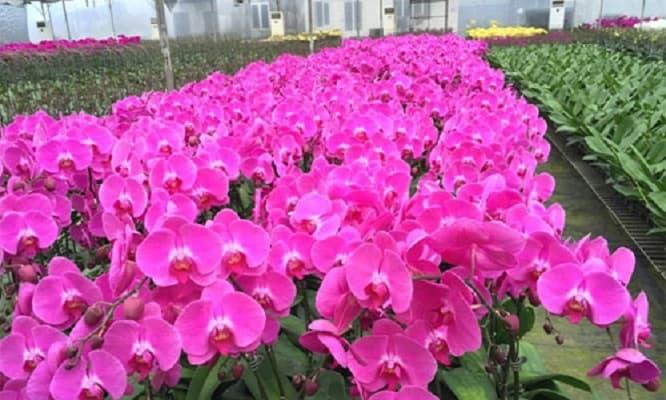 kích thích ra hoa