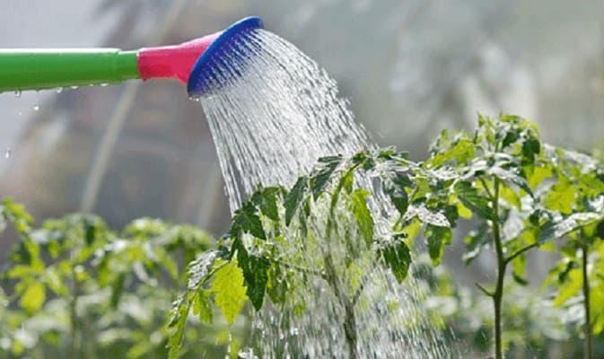 lượng nước cho cây