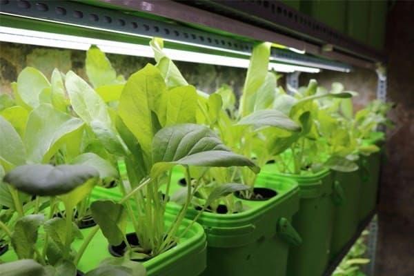 mô hình trồng rau sạch trong nhà bằng đèn led nông nghiệp