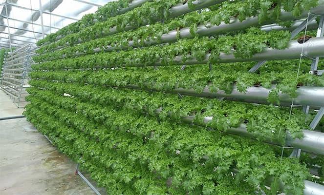 mô hình trồng rau thủy canh hồi lưu
