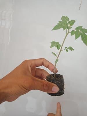 mua giá thể trồng rau thủy canh ở đâu