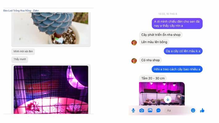 phản hồi từ khách hàng sử dụng đèn led trồng sen đá zako