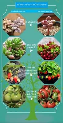 so sánh trước và sau khi sử dụng đèn led trồng cây