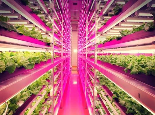 sử dụng đèn led giúp rau trồng tươi tốt hơn.jpg