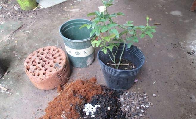 trộn giá thể trồng hoa hồng bằng xỉ than