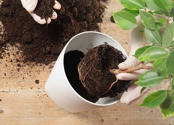 trồng lại cây hằng năm