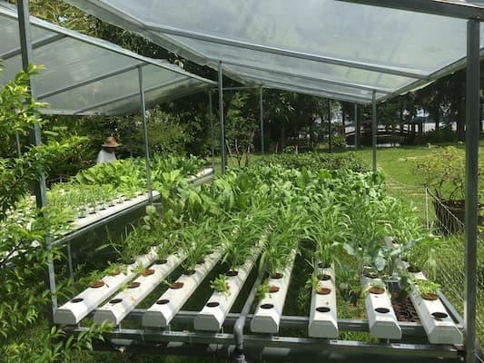trồng rau thủy canh hồi lưu quy mô công nghiệp
