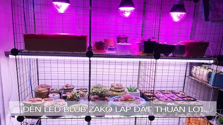trồng sen đá với đèn led bulb zako