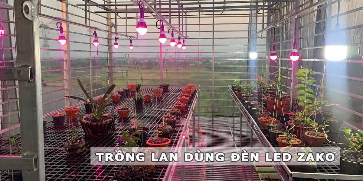 Ứng dụng trồng hoa lan bằng đèn led zako