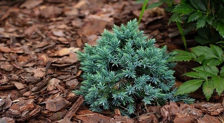 vỏ thông rất dễ tìm để làm giá thể trồng lan