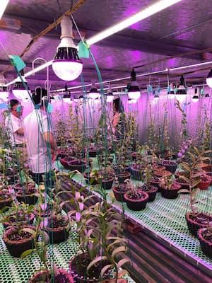 vườn lan viet phuong